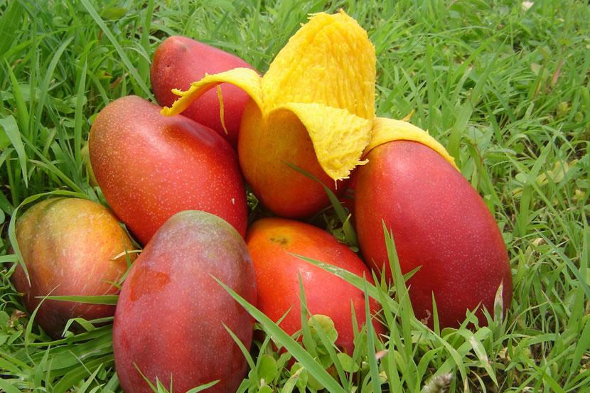 canapesia-mango-banner